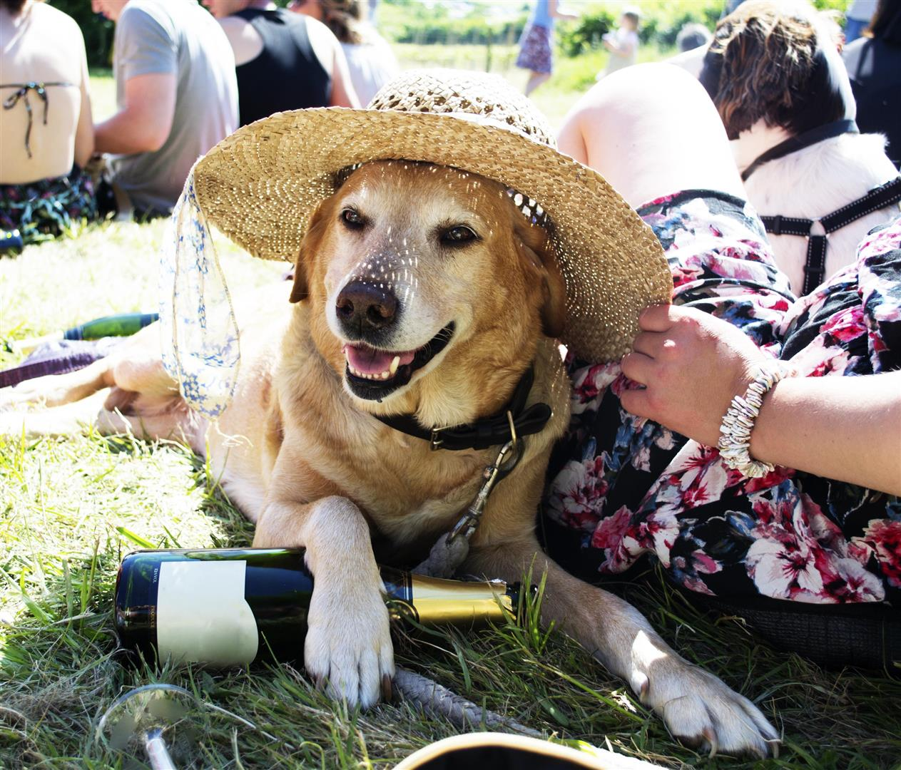 Festival with a dog